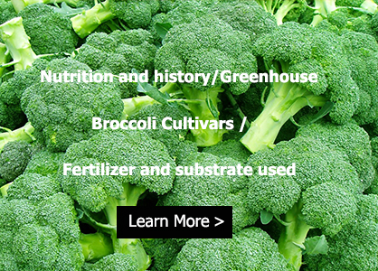 broccoli nutrient
